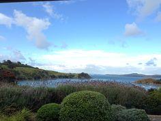 Waking up to this... Matiatia Bay, Waiheke Island.