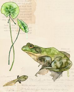 La nature Collection Estampe - peinture intitulée «La Nature Collection - étang», des fleurs de cerisier, grenouille, Art Print, impression botanique, mur, peinture d'Art