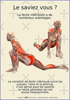 « Planches Musculo-squelettique des positions de Yoga - N°25 » par rodolphe Augusto | Redbubble Yoga Gym, My Yoga, Fitness Workout For Women, Yoga Fitness, Yoga Muscles, Hip Opening Yoga, Yoga Positions, Senior Fitness, Iyengar Yoga