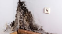 When it comes to preventing and terminating termites, the first question in many homeowners' minds usually has something to do with termite control cost. The downside to many termite treatments is that they do tend to be rather costly Clean Black Mold, Remove Black Mold, How To Remove, Diy Pest Control, Termite Control, Water Damage, Wainscoting, Restoration, Cleaning