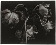 Linda Mahoney - Tulips in a Vase, 1998