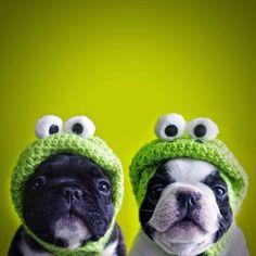 Disfraza a tus mascotas