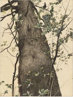 'The Oak.' Painting by Andrew Wyeth (1944).