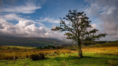 Drzewo, Pole, Dolina, Chmury