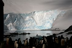 IMG_9204 - ice light | Flickr  Foto: Renata Lepage Port Locroy - Antartida 2006 Ice, Outdoor, Gentoo Penguin, Nature, Photos, Outdoors, Ice Cream, The Great Outdoors