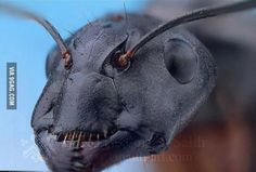 Close up head of an ant