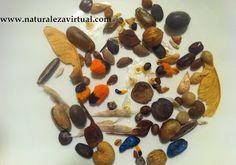Naturaleza Virtual: Strelitzia Nicolai - Germinación y Semillas