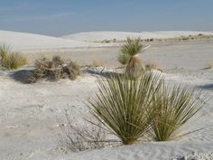 White Sands National Monument (pinned by haw-creek.com)