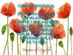 La ley de la atracción y los milagros en tu vida.   #UniversoDeAngeles www.facebook.com/UniversoDeAngeles