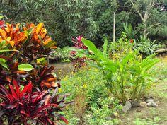 #tropicalgardens