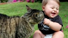 Funny Cats And Dogs Playing With Babies Compilation Gatos y Perros Jugando Con Bebs Recopilacin Funny Cats And Dogs Playing With Babies Videos Compilation Gatos y Perros Jugando Con Bebs Vdeo Recopilacin Cats are cute and funny Cats are on Pet Lovers Funny Cat Videos, Funny Cats, Funny Animals, Cute Animals, Funny Pranks, Pet Videos, Compilation Videos, Baby Videos, Unique Animals