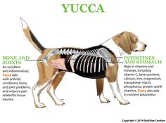 Yucca for dogs is an all-natural supplement that provides pain relief, digestive support, and is an appetite booster. Browse all of NHV Natural Pet Products. Online Pet Supplies, Dog Supplies, Cheap Pet Insurance, Feline Leukemia, Bone And Joint, Cane Corso, Pet Health, Dog Accessories, All Dogs