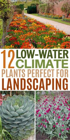 These 12 drought tolerant plants will add life and color to your garden, even if you live in a hot and dry desert environment. Home Landscaping, Front Yard Landscaping, Sidewalk Landscaping, Country Landscaping, Low Maintenance Backyard, Diy Vintage, Drought Tolerant Landscape, Live, Curb Appeal