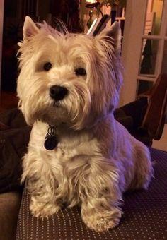 Hobbs ~ doggiechecks.com