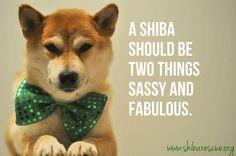 ★shiba★