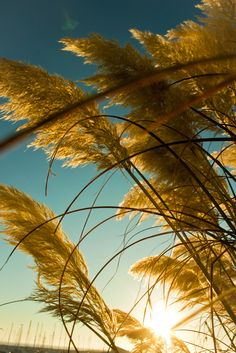 Reeds & Sun - The Harbour of Póvoa de Varzim - Portugal - (c) Photographer - AnneCecile - YouPic