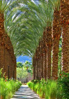 palm tree tunnel, Hyatt Hotel, Palm Springs, CA