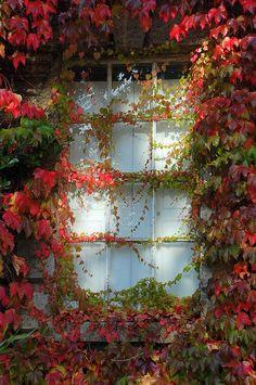 Window in Queen's Square, Bath, UK