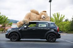 Finally! We've been so disappointed in the lack of large plush bears around town, especially ones that are only 92 inches. Thankfully Costco has answered our prayers and will be offering this 93-inch gigantic bear in stores starting this November (and released an adorable video in the meantime with a special appearance by Russell Wilson).