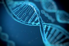 Experimento científico encontra cura para enrijecimento de músculo do coração com uso de célula-tronco