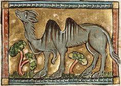 Medieval Bestiary : Camel Gallery