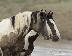 Geschilderde vrienden II Fine Art Wild paard Photograph