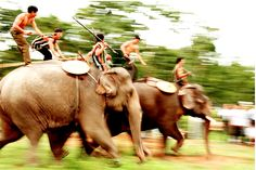 Elephant Racing Festival, Vietnam.    If you have a chance to Dak Lak Province in springtime, you should not miss the Elephant Race Festival, normally celebrated in the third lunar month. Attending the festival, you will be lived in the boisterous atmosphere of the echo of gongs and the spectacular performances of the elephants from the Central Highlands forest.