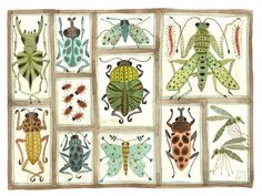 Bug collection, scientific illustration