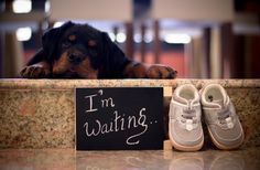 This Pregnant Couple Did A Perfect Photoshoot After Being Told To Give Up Their Dogs Unique Maternity Photos, Maternity Poses, Unique Baby Announcement, New Baby Announcements, Pregnant Dog, Pregnant Couple, Pregnant Lady, Animal Shelters Near Me, Maternity Photographer