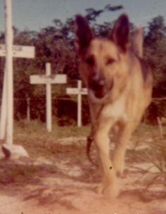 War dog Rex. K-9 cemetery. Cam Ranh, Vietnam