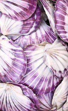 v like violet purple shells Purple Love, All Things Purple, Purple Rain, Shades Of Purple, Purple Hues, Color Shades, Damien Hirst, Art Furniture, Sea Creatures