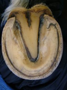 WHAT IS A HEALTHY HOOF AND WHAT DOES IT LOOK LIKE