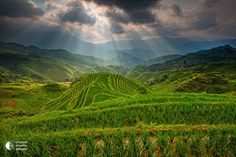 China, rice fields