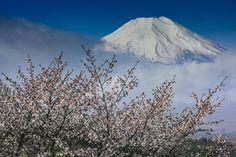 Spring Fuji...  忍野村 二十曲峠