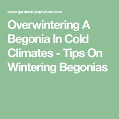 Overwintering A Begonia In Cold Climates - Tips On Wintering Begonias