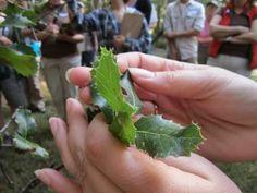 Volunteer with the Sacramento Tree Foundation