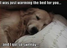 I was just warming the bed for you and got so sleepy
