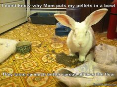 Bunny Shaming: Daily Shame: