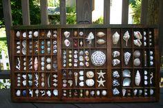 Vintage Seashell Printers Tray Drawer I