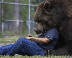 """Jim Kowalczik plays with Jimbo, a 680kg Kodiak bear, at the Orphaned Wildlife Center in Otisville, New York""  Image copyright: Mike Groll/AP"