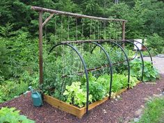 Raised bed,  frame, trellis