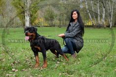 https://www.all-about-rottweiler-dog-breed.com/ #girl #rottweiler #photography