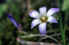 flores de primavera-spring flowers by Pedro Francisco  Condés de la Torre on 500px