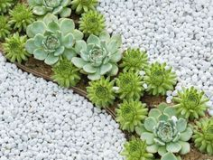 The Spectacular World of Succulents - See more at: http://worldofsucculents.com/the-spectacular-world-of-succulents