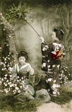 "thekimonogallery: "" This postcard shows two Bijin (Japanese Beauties) brushing insects from a tree and trapping them in a cage. The caption reads 螢狩 (firefly hunt). Image and text via. Vintage Photos Women, Antique Photos, Vintage Pictures, Vintage Photographs, Old Pictures, Old Photos, Japanese Photography, Old Photography, Vintage Japanese"