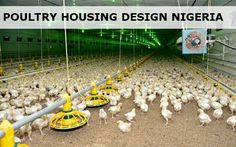 Poultry Housing needs to be well equipped and ventilated: heating and cooling mechanisms and of course feeders and water drinkers. Poultry Cage, Poultry Farming, Starting A Coffee Shop, Chicken Cages, Baby Chicks, Heating Systems, Healthy Chicken, Hens, Agriculture