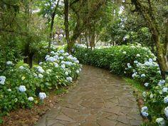 Caminho de flores, Canela - Rio Grande do Sul