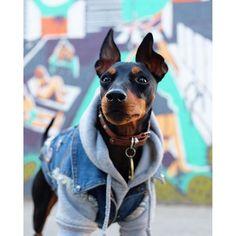 Bones dog hoodie and Custom Dog Battle Jacket www.pethaus.com.au
