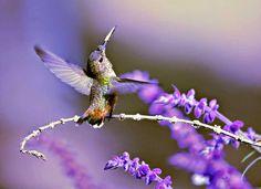 Métamorphose Développement: Colibri et vous ?  !!!   | Légende Colibri par Hél...