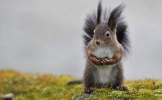 Animal - squirrel Wallpaper